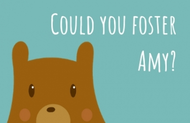 East Lothian Council fostering graphic of a cartoon bear for the 'Could you foster Amy' campaign.